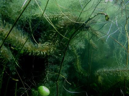 Suichuforest