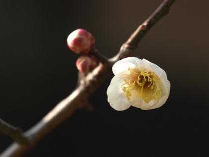 Shirakaga090211