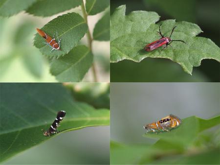 Micro_moth1006