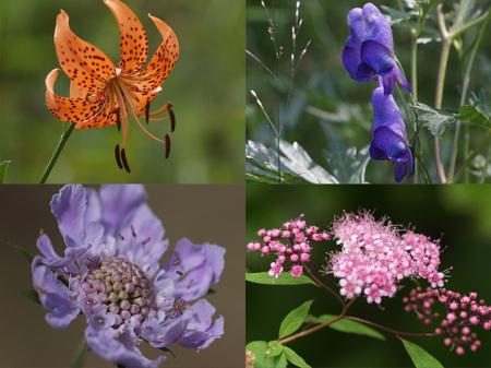 Flower_of_nyugasa
