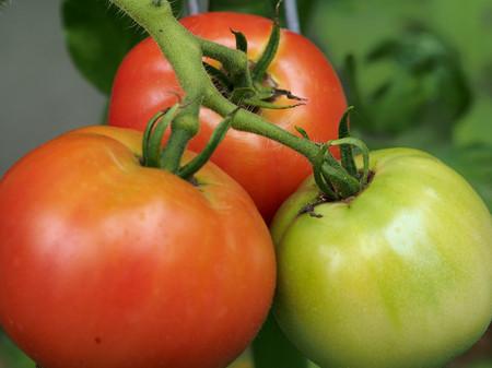 Tomato140816