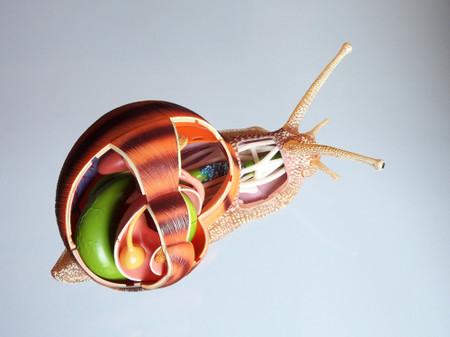 4d_snail